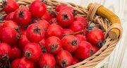 خواص و مضرات زالزالک ، 13 خاصیت زالزالک برای سلامتی و درمان بیماری