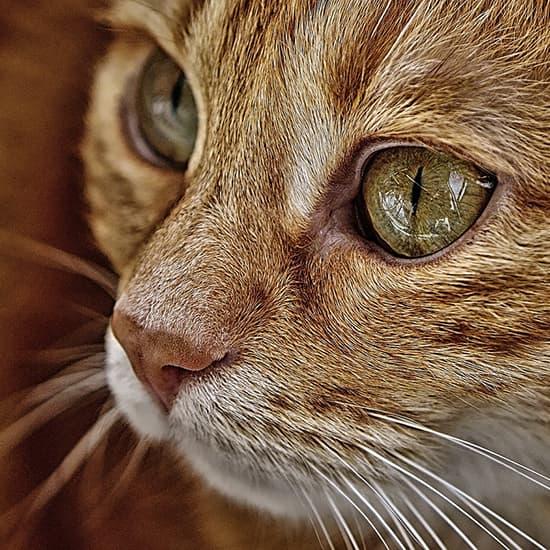 عکس پروفایل حیوانات , عکس پروفایل گربه , عکس پروفایل پیشی
