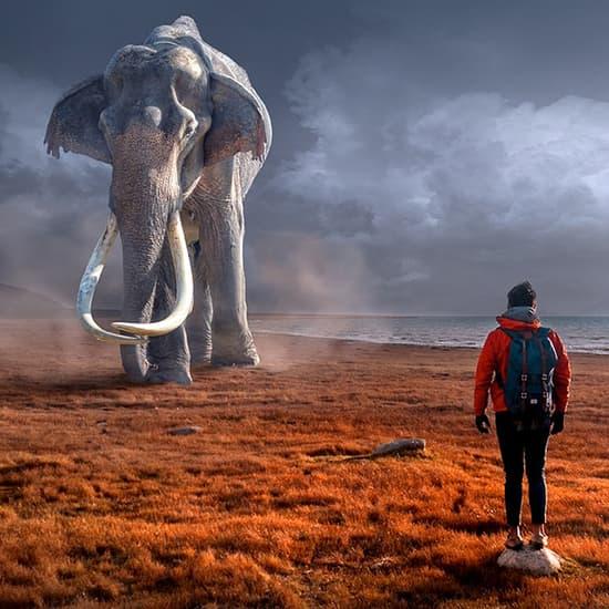 عکس پروفایل فیل , عکس پروفایل جنگ مرد و فیل , عکس پروفایل زیبا