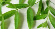 خواص و مضرات به لیمو ، 9 خاصیت به لیمو برای درمان و سلامتی بدن