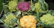 خواص و مضرات گل کلم ، 21 خاصیت گل کلم برای درمان و سلامتی بدن