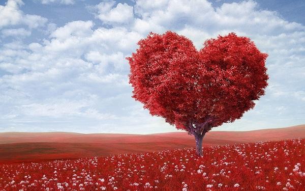 درخت قلبی - عاشقانه